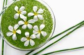 picture of frangipani  - bowl of with white frangipani with green small leaves in water and grove - JPG
