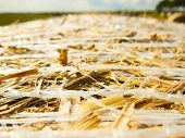 foto of hay bale  - Close-up top view of a bale of yellow hay in a green field at harvest with blurred background. ** Note: Shallow depth of field - JPG