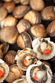 picture of clam  - Shells and clams on a stall in a fish shop - JPG