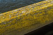 stock photo of lichenes  - Closeup of a weathered wooden beam covered with lichen and moss on a sunny day in spring - JPG