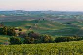 foto of butt  - Farmland in early morning Steptoe Butte State Park Oakesdale Washington - JPG