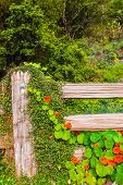 stock photo of log fence  - Cozy Garden Flowers and the Wooden Fence Closeup - JPG