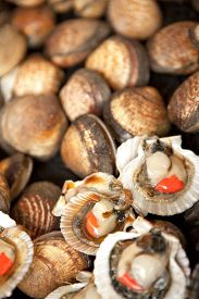 picture of stall  - Shells and clams on a stall in a fish shop - JPG