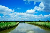 River Cruise In Norfolk Broads, England