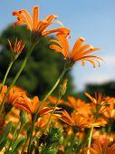 Light Orange Flowers