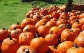 Harvest Of Orange