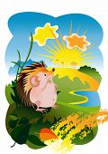 The Hedgehog and the sun