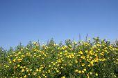 Flowers & Blue Sky