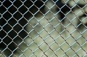 Chain-wire Fence. Fence Made Of Steel Wire Mesh. In Places, The Rusted Wire Mesh Steel With Shabby P poster