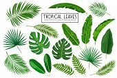 Vector Set Tropical Leaves. Jungle Exotic Leaf Philodendron, Areca Palm, Royal Fern, Plumeria And Et poster