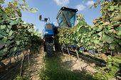 Mechanical Harvest