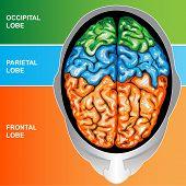 Superiores cerebro humano