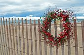 foto of sand dollar  - Sand dollar and starfish hanging on berry Christmas wreath on beach fence - JPG