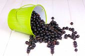 Black currant in metal bucket on wooden background