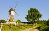 windmill and vineyard near Montsoreau, Pays-de-la-Loire, France