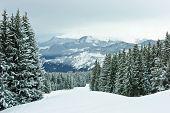 Sparren On Winter Mountain