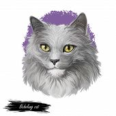 Nebelung Cat Longhaired Russian Blue Breed Isolated On White Background. Digital Art Illustration Of poster