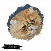 Persian Cat Long-haired Breed Isolated Feline Animal Portrait. Digital Art Kitten With Round Face An poster
