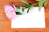 Pink peony with card on wooden background