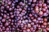 Soft Focus Group Of Fresh Ripe Red Grapes In The Market.red Wine Grapes Background.a Lot Of Ripe Gra poster