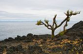 Lifeless Landscape Of Volcanic Island