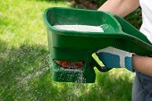 foto of fertilizer  - Manual fertilizing of the lawn in back yard in spring time