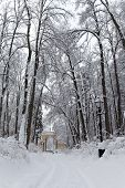 Mysterious Fairytale Winter Park Landscape With Snow Covered Trees Bushes And A Path That Leads To A poster