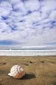 Seashell View