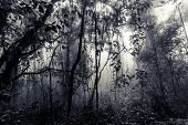 Misty tropical forest of Chiang dao in Thailand, vintageblue tinted edition, Chiang dao, Thailand poster