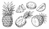 Sketch Of Pineapple. Isolated Hand Drawn Ananas Slices. Citrus Fruit Cut In Half Or Tropical Sliced  poster