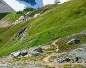 Two Bear Graze In Mountain Top Meadow In Washington Wilderness poster