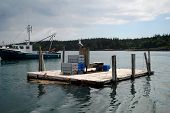 Tiny Floating Dock