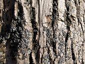 The Bark Of Tree