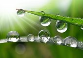 pic of raindrops  - Dew drops close up - JPG