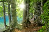 pic of path  - Landscape with the sun shining through the foliage with a clear turquoise lake behind the trees - JPG