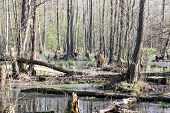 Swamps Of Kampinos National Park