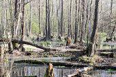 Swamps Of Kampinos National Park