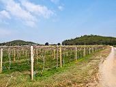Wine Yard In Nakorn Ratchasima, Thailand