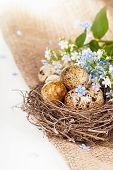 Quail eggs in a nest, forget-me-nots on a canvas