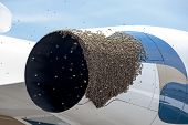 Bees On A Plane