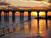Decline To Brighton-scourge