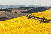 Crete Senesi, Characteristic Landscape In Val D'orcia