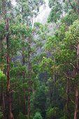 Famous Australian Rainforest