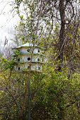 Birdhouse For Marlins In Woods
