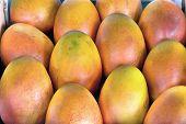 Grove Grown Mangoes Closeup