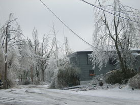 pic of power lines  - This street was impassable due to down power lines and branches that had fallen off trees - JPG