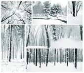 Winter collage with forest, county, park and many trees with snow