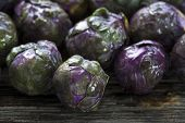 Raw Organic Purple Brussels Sprouts