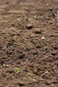 Freshly Cultivated Garden Soil