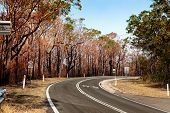 After Bushfire Habitat Destruction Natural Disaster